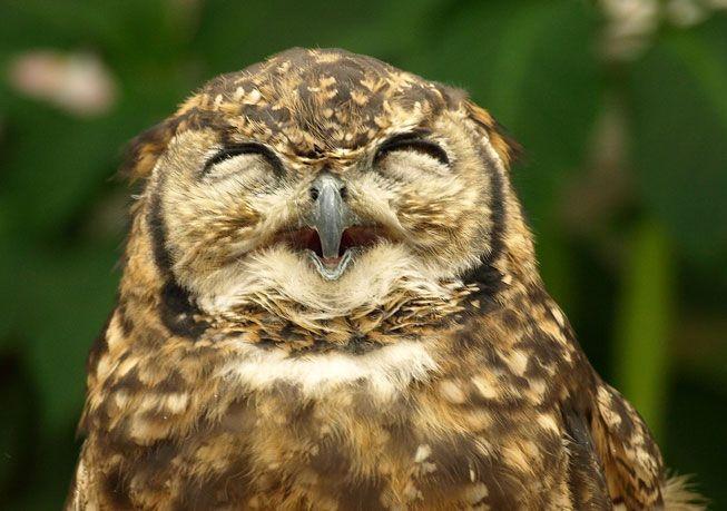 Owl-Smile-Open-Beak.jpg.838x0_q80