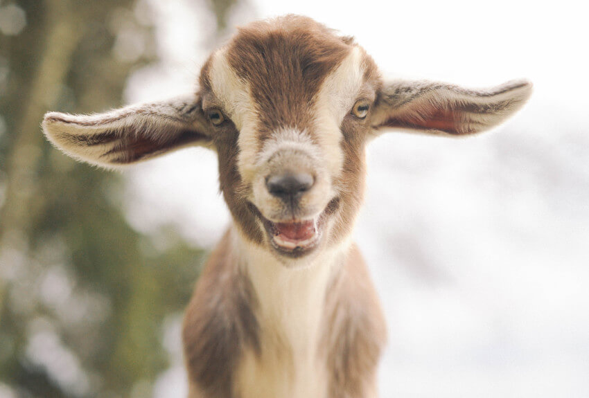 smiling-adorable-animals